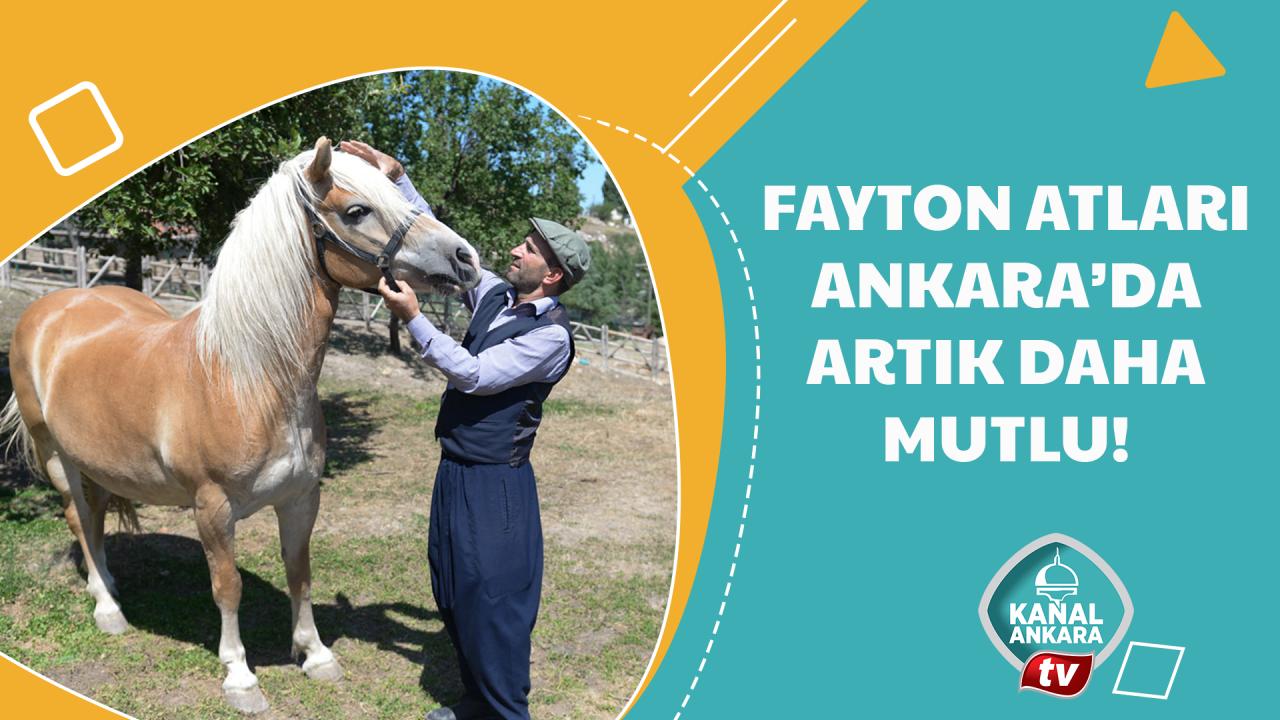 Özgürlüğüne kavuşan fayton atları ilgi odağı oldu!